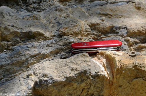 Zoom sur des strates de calcaire viséen du bord de la D9 près de Régny