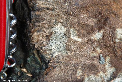 Zoom sur les belles structures spinifex de la couléé de komatiite