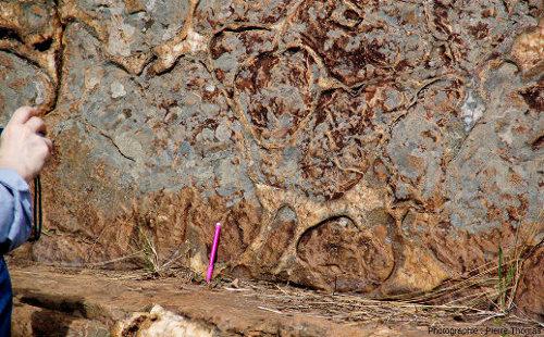 À quelques dizaines de mètres de l'affleurement précédent, le ruisseau recoupe des pillow lavas, preuve que ces coulées ont été émises sous l'eau, vallée de la Komati River, Afrique du Sud