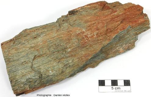 Échantillon de komatiite (ramassé dans un éboulis et ramené à Lyon) et présentant des cristaux en aiguille d'une vingtaine de centimètre de long