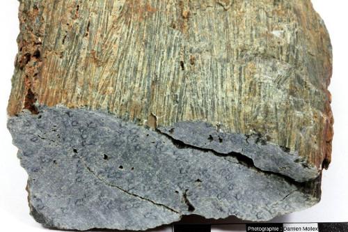 Autre vue de l'échantillon de la figure précédente montrant deux plans perpendiculaires prouvant que les cristaux géants sont bien des aiguilles et non des lames