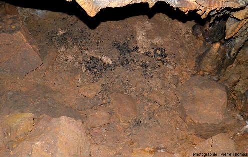 Ossements animaux associés à du charbon de bois dans la grotte de Foissac (Aveyron)