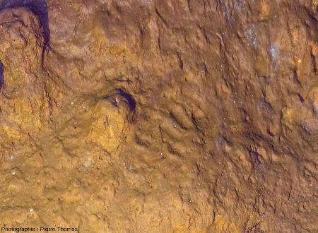 Zoom sur les traces de phalanges dans l'argile d'une paroi, grotte de Foissac (Aveyron)