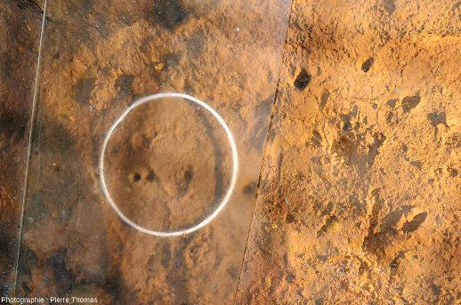 Trace de pied d'enfant au pied d'une paroi argileuse, grotte de Foissac (Aveyron)