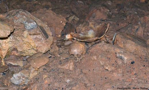 Gros plan sur un secteur de l'éboulement à l'ancienne entrée de la grotte de Foissac montrant crâne humain et fragments de poteries