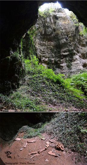 Depuis le fond du Cloup d'Aural (commune de Bach, Lot) – Moulage de fossile de Cadurcotherium cayluxi