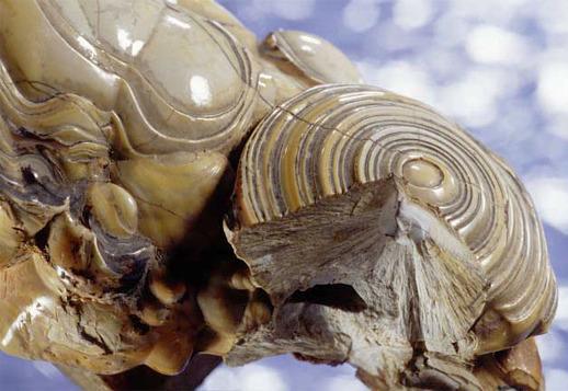 Nodule phosphaté servant d'emblème à la Réserve Naturelle Nationale d'intérêt géologique du département du Lot