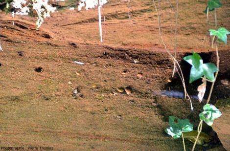Zoom sur un secteur où les sables miocènes contiennent quelques galets