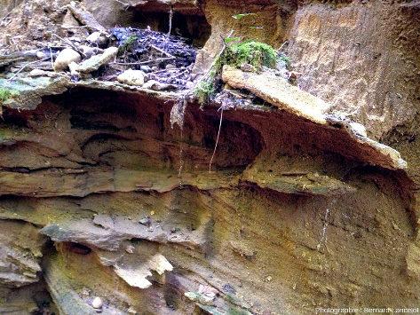 Gros plans sur des sables relativement grossiers, irrégulièrement grésifiés (donc résistant irrégulièrement à l'érosion) et montrant de belles stratifications obliques