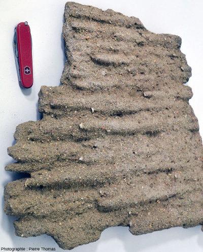 Base de banc gréseux tombé de la falaise de molasses miocènes de Saint-Fons des photos précédentes