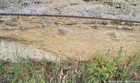 Zoom arrière sur cet affleurement de molasse à galets mous de Saint-Fons (Rhône)