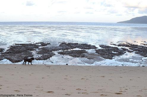 Une côte sablo-vaseuse à marée basse