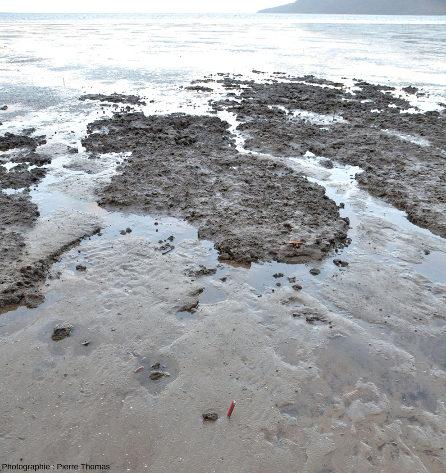 Bancs d'argile entourés de sable argileux sur lequel sont posé des galets d'argile, des galets mous