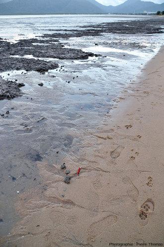 """Vue générale montrant des galets mous transportés sans être détruits """"loin"""" des bancs d'argile d'où ils proviennent et déposés sur des bancs de sable"""