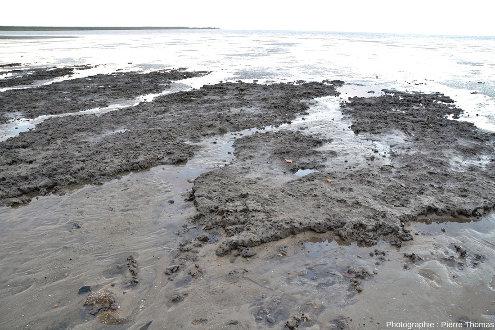 Vue sur un banc d'argile pré-fracturé pendant la marée basse pendant laquelle a été prise la photo