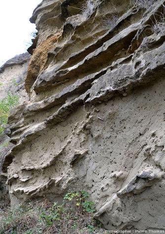 Affleurement à gogottes semi-dégagées au sein de sable non consolidé (avec des trous d'hyménoptères)