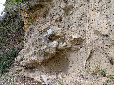 Grosse masse grésifiée au sein de sable non consolidé