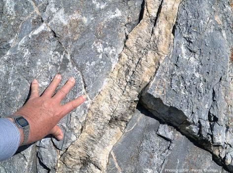 Filon de calcite traversant un marbre urgonien (calcaire métamorphisé) à quelques mètres de la Faille Nord-pyrénéenne (FNP), au bord de la route D619, Sournia, Pyrénées-Orientales