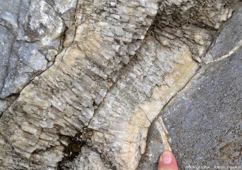 Détail du filon de calcite, Sournia, Pyrénées-Orientales