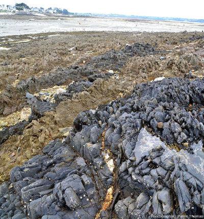 Photographie du même estran de l'ile Callot montrant que l'encaissant schistosé des filons de quartz est d'une double nature, une majorité claire (méta-granite probable) et des filons sombres (méta-roches basiques probables)