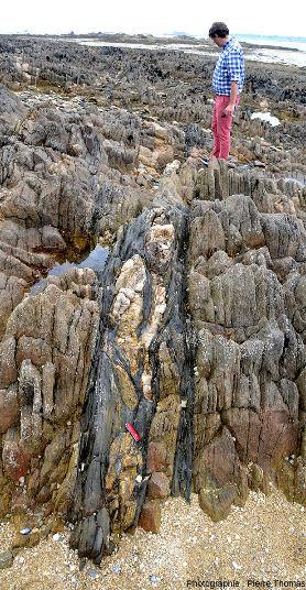 Vue d'ensemble d'un filon de quartz (à géométrie complexe) intrusif au sein d'un niveau basique schistosé, ile Callot (Finistère)