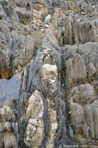 Vue rapprochée d'un filon de quartz (à géométrie complexe) intrusif au sein d'un niveau basique schistosé
