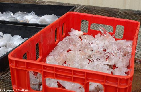 Cageot d'échantillons de quartz prêts à la vente dans la Clear Creek Mine, Arkansas