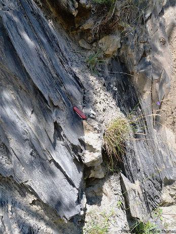 Vue d'ensemble d'un autre filon de quartz + calcite recoupant les marnes noires schistosées dans le même secteur de la vallée de la Lignarre