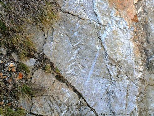 Fentes en échelons remplies de quartz recoupant une dalle de grès siliceux presque verticale, gorges du Guil, Hautes-Alpes
