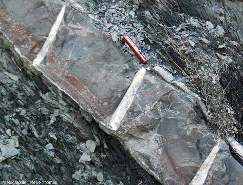 Détail de la couche de calcaire tronçonnée des photos précédentes