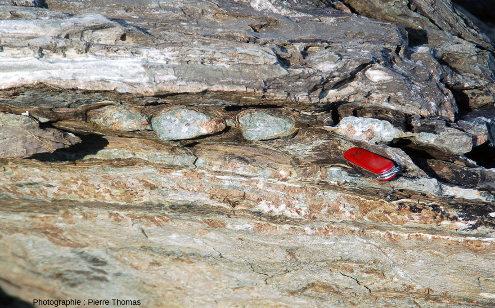 Vue d'ensemble sur un très bel ensemble de cinq boudins carbonatés emballés dans un niveau fait une roche particulièrement schistosée (méta-marne probable)