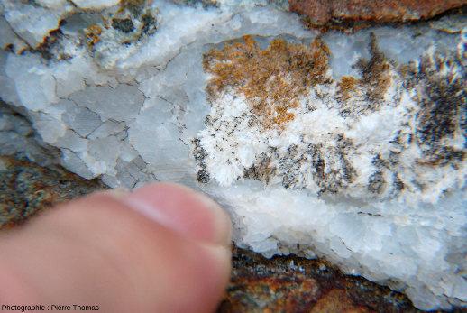 Détail sur un niveau de marbre fait de calcite gris-clair contenant des cristaux blancs formant des aiguilles: des cristaux de wollastonite
