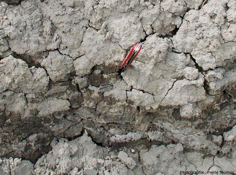 Un cristal prismatique de gypse (en bas à gauche du couteau) en place dans les argiles de Cornillon-en-Trièves (Isère)