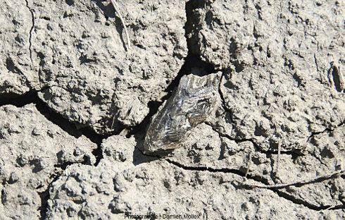 Au sol, dans les argiles würmiennes à gypse au-dessus du lac de Monteynard (Isère)