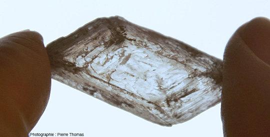 Cristal de gypse de la vue d'ensemble, vu par transparence