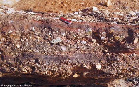 Zoom sur l'unité 1, ici en saillie, de la série sédimentaire pléistocène de la plage de la Mine d'or de Pénestin (Morbihan)