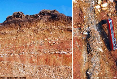 Traces racinaires grisâtres à verdâtres dans les couches rouges de Pénestin (Morbihan) mises à jour dans une tranchée récente