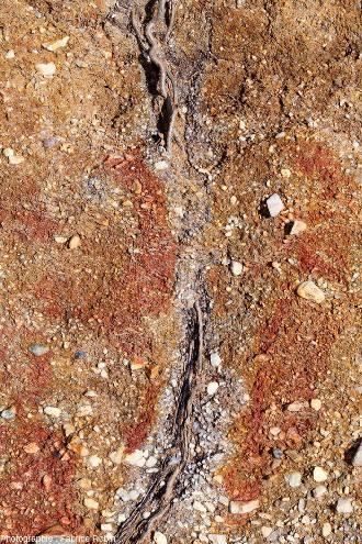 Gros plan sur une trainée grisâtre qui s'avère être un tube parcouru en son centre par des racines provenant d'un des arbustes morts de la haie bordant le pré situé au-dessus de la tranchée