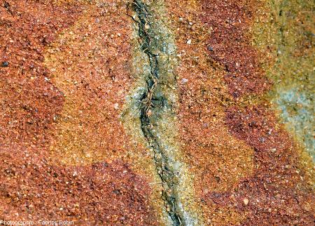 Détail montrant différents stades de réduction du fer dans des sables autour d'une racine morte