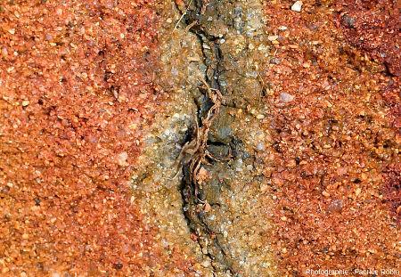 Zoom montrant différents stades de réduction du fer dans des sables autour d'une racine morte