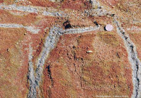 Détail montrant des racines mortes verticales et horizontales entourées de sable dépourvu d'hydroxydes ferriques