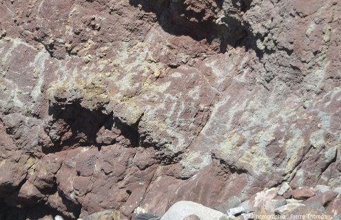 Réseau de tubes verdâtres (sans Fe3+) au sein de sables argileux violacés (avec Fe3+), Colunga (Asturies, Espagne)