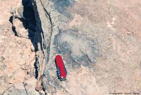 Zoom sur des structures dans les roches sédimentaires de la formation du Nama (750Ma), très probablement des stromatolites