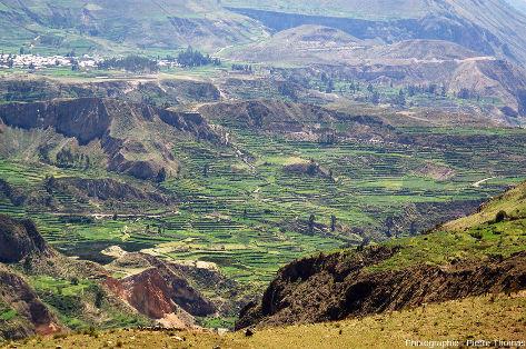 Cultures en terrasse de la haute vallée de la Colca (Pérou), en amont du canyon