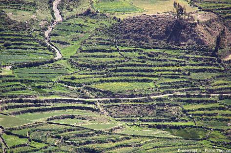 Zoom sur les cultures en terrasse de la haute vallée de la Colca (Pérou), en amont du canyon