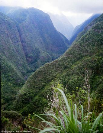 La vallée de la rivière de l'Est, ile de La Réunion