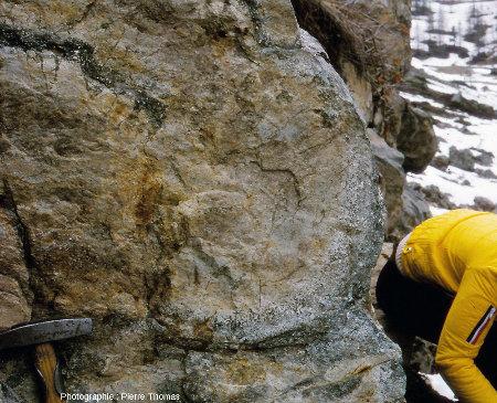 Pour comparaison, coupe d'un pillow lava non déformé photographié sur l'arête Sud-Ouest du célébrissime Chenaillet (Hautes-Alpes)