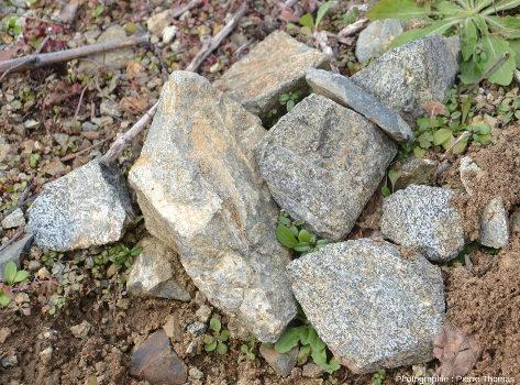 Échantillons de gabbro à grain relativement fin ramassés dans le massif du Rivolet, Rhône