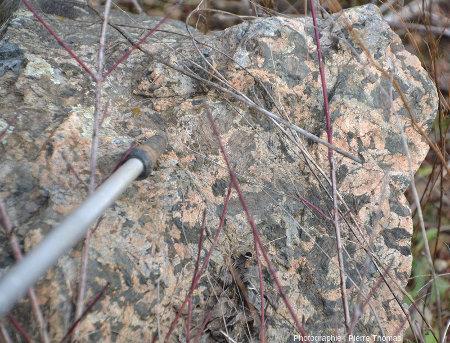Échantillon de gabbro à gros grain, ressemblant aux euphotides alpines