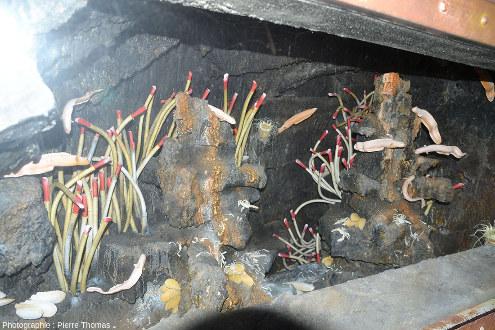 """La majorité des sources chaudes de la planète se trouve au fond des océans, au niveau des dorsales, ce qu'évoque cette maquette """"grandeur nature"""" visible dans le musée Géothermia, qui a choisi de représenter l'écosystème des fumeurs noirs, avec en particulier des vers tubicoles géant Riftia pachyptila"""